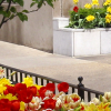 Window Boxes & Planters for City Dwellers