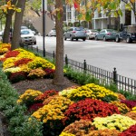 chicago urban landscaping