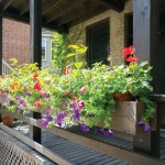 chicago-patio-flowers