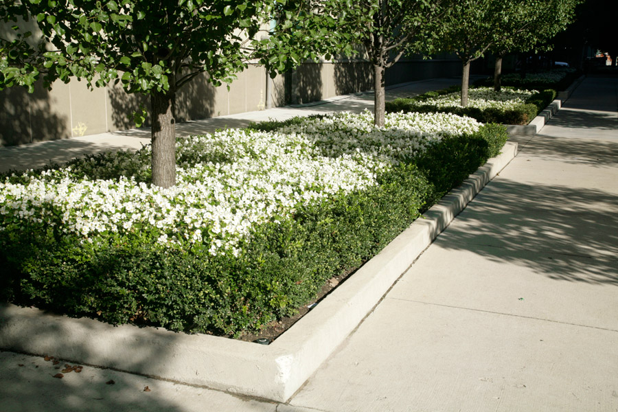 Chicago Landscape Design