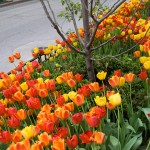 Chicago Landscaping Designer