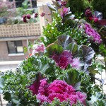 windowboxes_sm_07