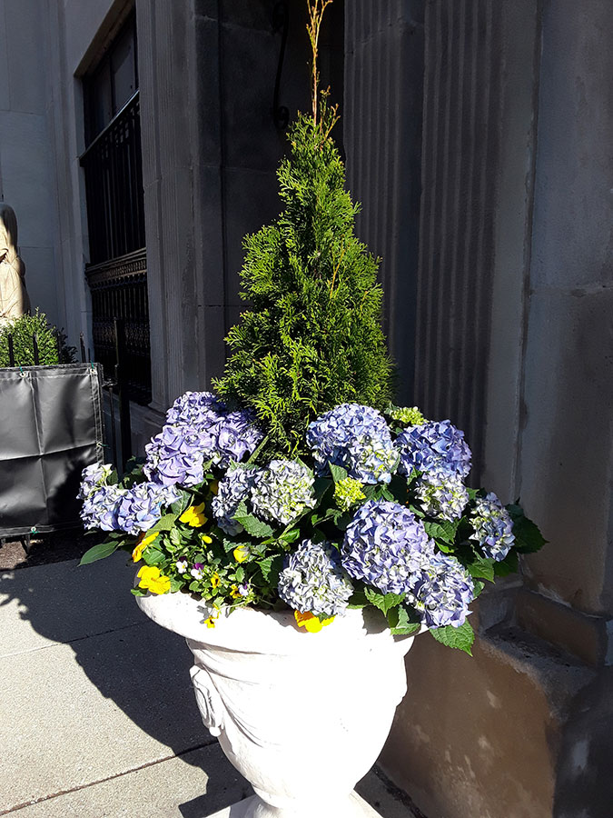 Junior Terrace, Planter in Spring