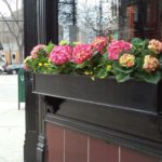 Lincoln Park Chicago windowboxes in Spring