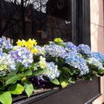 Chicago Windowbox Design