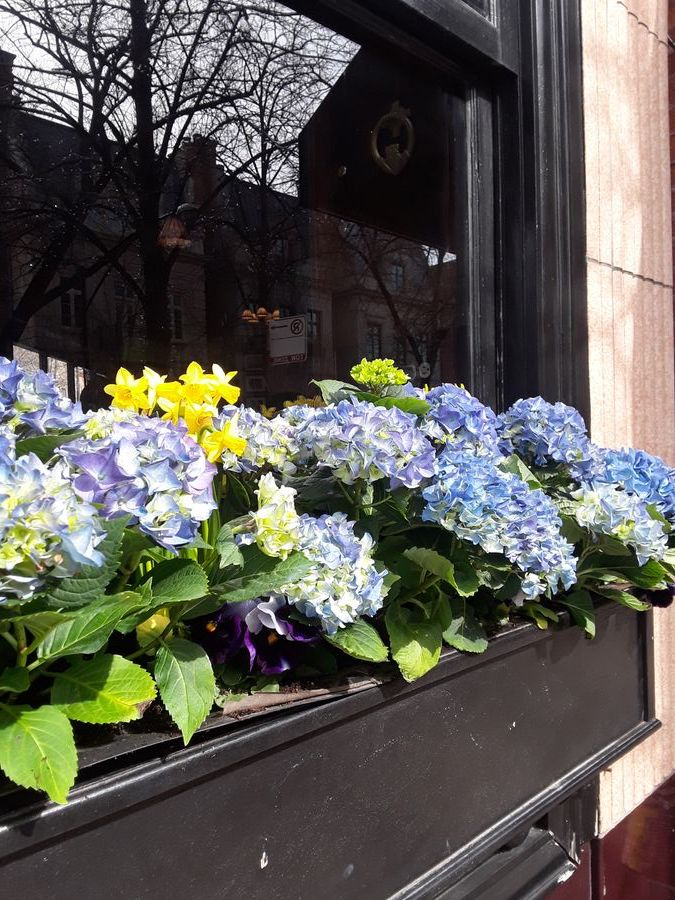 Chicago Windowbox Design