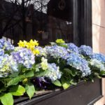 Lincoln Park Chicago windowbox