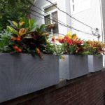 Chapman's urban landscaping
